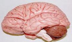 تاثیرات مثبت عرق کردن بر مغز انسان