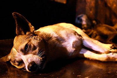 سگکشی در شیراز کار چه کسي بود؟