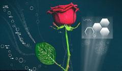 تغییر رنگ برگهای گل رز با فشار یک دکمه