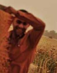 پس از 11 سال گندم ایرانی به تنهایی قوت مردم میشود