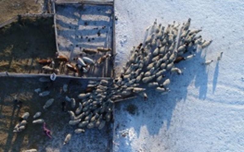 زندگی عشایری در سرمای سیبری