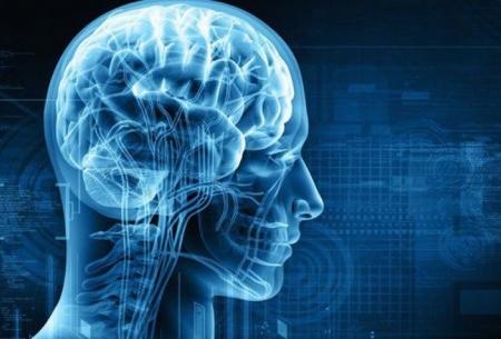 نقش یک عصب در روند ترمیم مجدد مغز