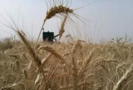 ایران از واردات گندم بینیاز شد