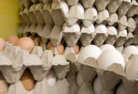 تخممرغ دانهای ۶۵۰ تومان گران نیست!