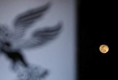یک پیشبینی برای جشنواره فیلم فجر ۳۷
