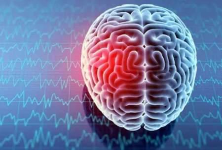 تاثیر بزرگ بودن مغز روی ابتلا به سرطان