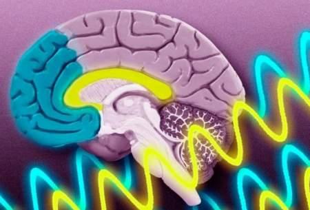 """نقش """"دوپامین"""" در واکنش به خطر"""