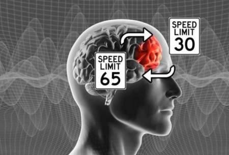 مغز چطور تغییر مقررات را درک میکند؟
