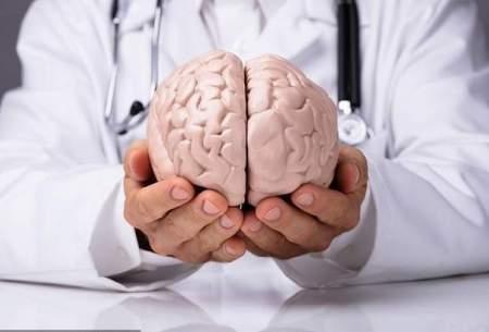 مغز بزرگتر الزاماً نشانه باهوشتر بودن نیست