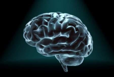مغز چگونه از خاطرات محافظت میکند؟