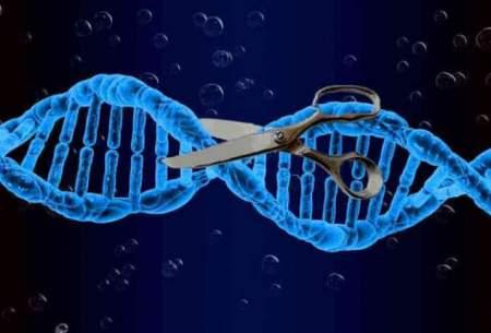 قیچی جدید برش ژن شناسایی شد