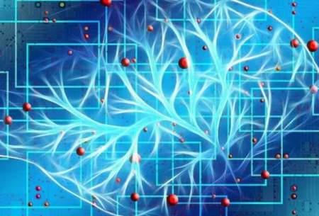 کشف شکل جدیدی از ارتباط نورونها در مغز