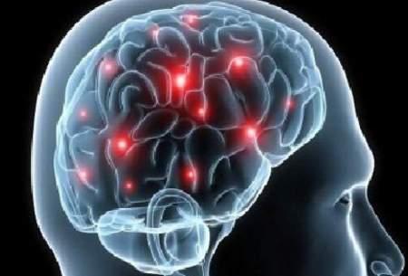 مغز کمخوابها، خودخوری میکند