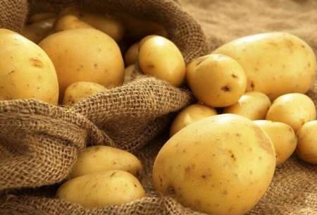 قیمت سیبزمینی کاهش مییابد