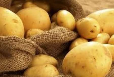 نقش صادرات در گرانی سیبزمینی رد شد