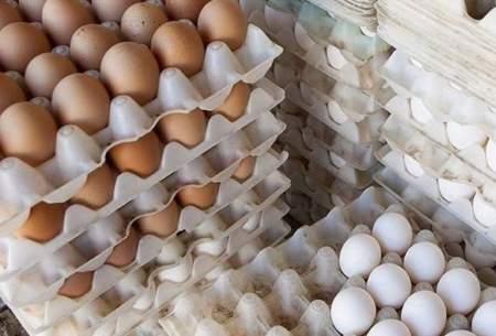 تخممرغ رسماً ۱۵درصد گران شد