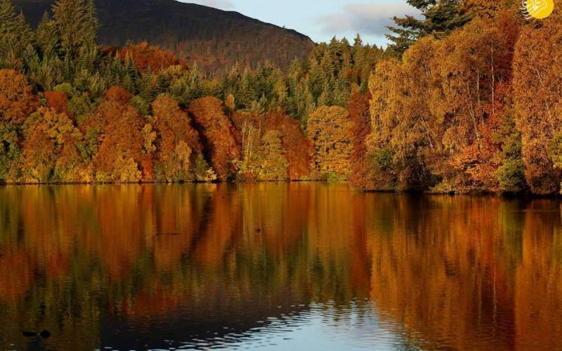 جادوی رنگها در طبیعت پاییزی