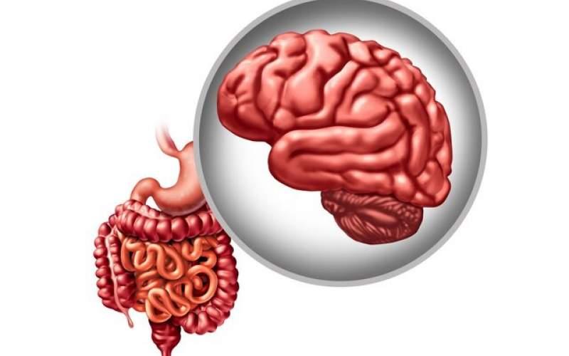 تاثیر باکتری روده در پیشگیری از پارکینسون