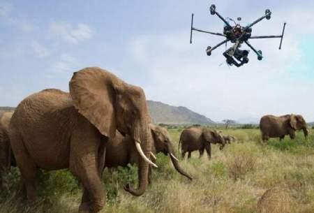 نجات گونههای در حال انقراض با پهپاد!