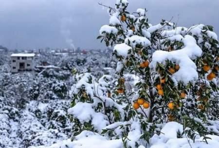 بارش برف تداوم دارد؛ منتظر کاهش دما باشید