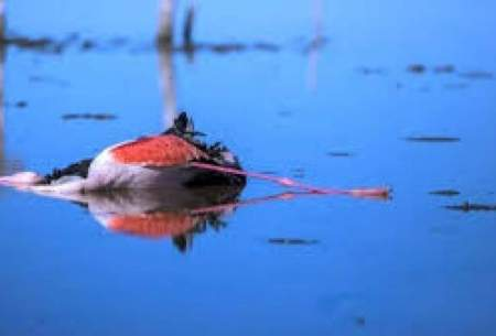 هشدار به مردم درباره لاشه پرندگان مهاجر