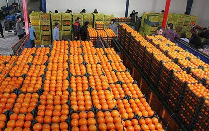 کسادی بازار میوه شب عید
