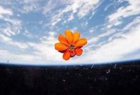 گل در فضا به مناسبت اولین روز بهار