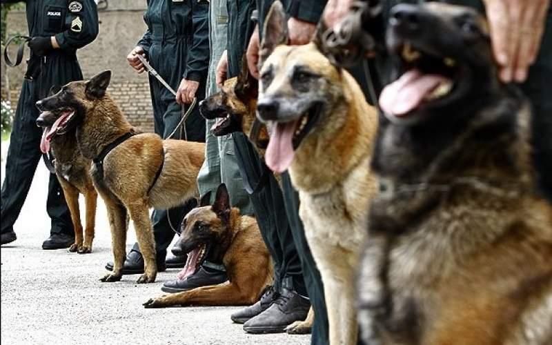 تاثیر آب و هوا بر عملکرد سگهای موادیاب