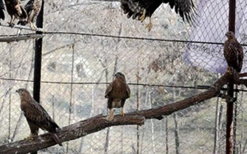 مرگ چند گونه پرنده در باغ وحش ارم