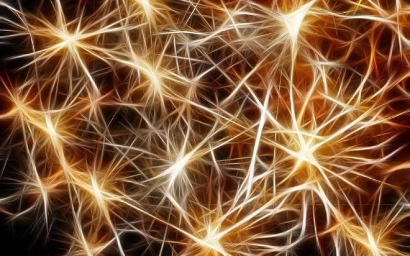 نورونهایی که قند خون را تنظیم میکنند