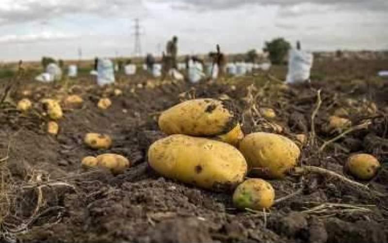 حرفهای کشاورزی که از فقر به ستوه آمد