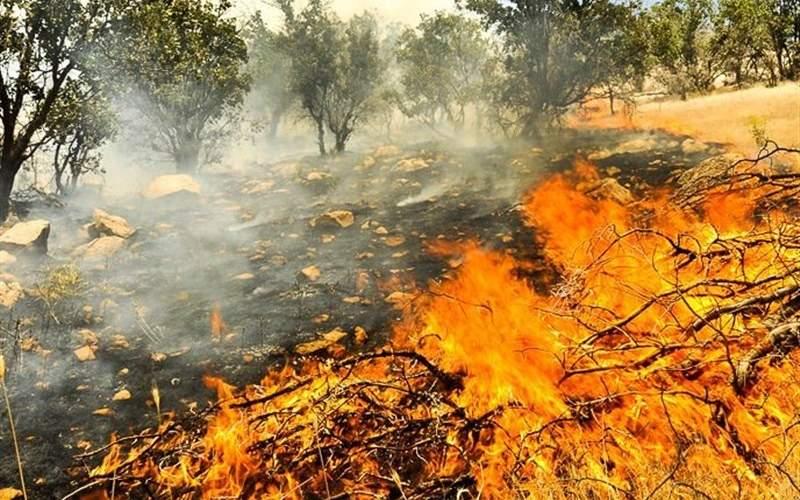 سازمان محیط زیست: ۹۹۰هکتار در آتش سوخت