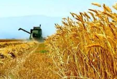 پای دلالان به امر خرید گندم باز میشود