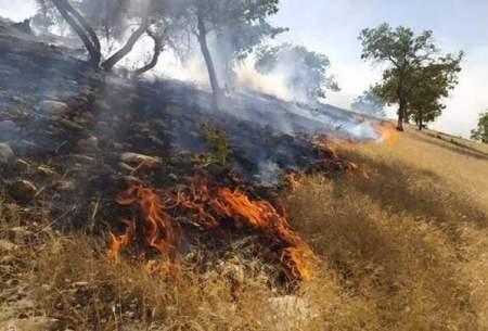 آتش سوزی گسترده درجنگلها و مراتع پیچاب باشت