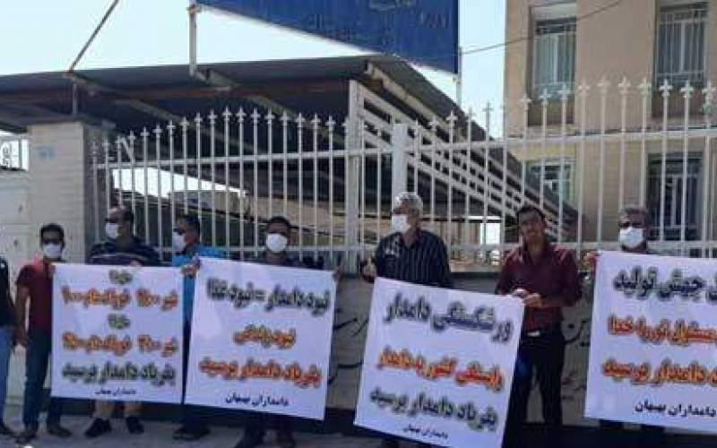 تلف شدن دامها در خوزستان به دلیل گرانی خوراک