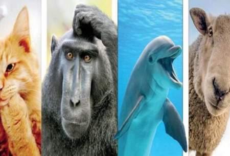 در ذهن حیوانات چه میگذرد؟