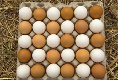 تخم مرغ شانه ای ۳۰ هزار تومان شد