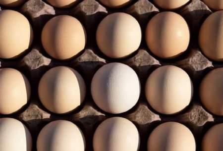 آشفتگی بازار تخم مرغ تا کی ادامه دارد؟
