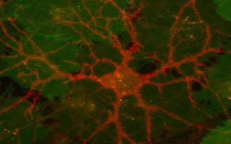 حسگرهایی که اسرار شیمی مغز را برملا میکنند!