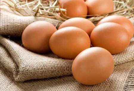 تعقیب رد دلار در قیمت تخممرغ