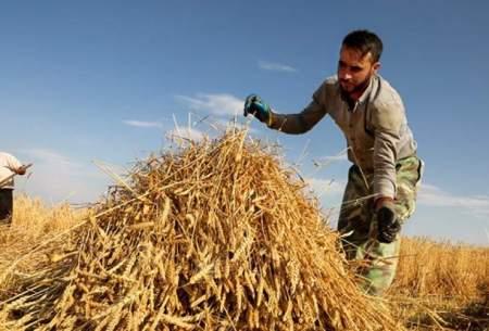 نرخ خرید تضمینی گندم بسیار پایین است