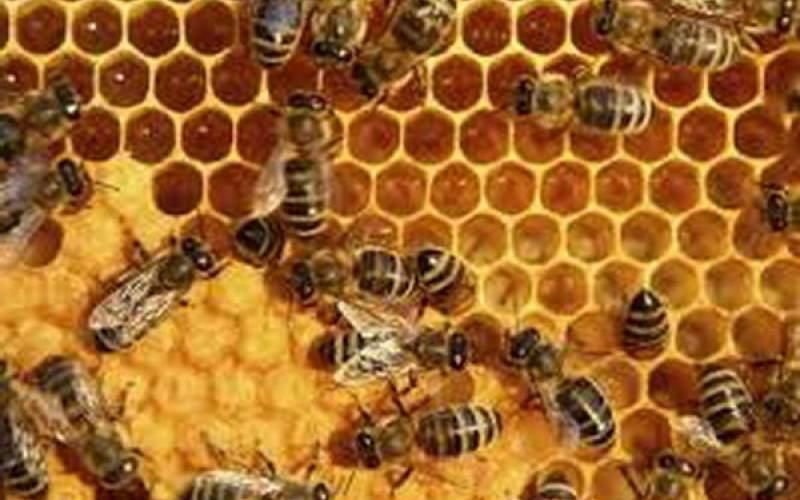 تاثیر زهر زنبور عسل بر سرطان سینه