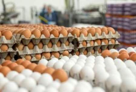 قیمت تخممرغ در مغازهها دو برابر نرخ مصوب