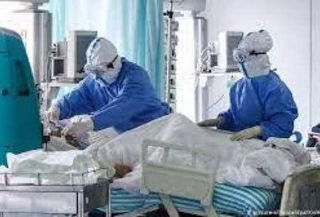بستری ۳۰۶ بیمار در بخشهای کرونا در بوشهر