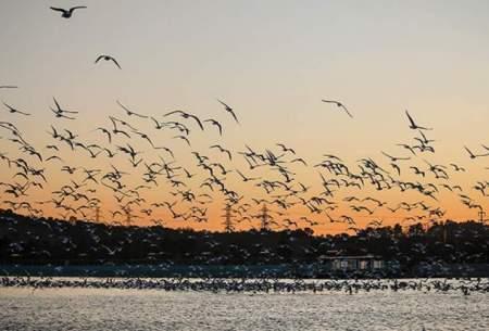 ادامه ورود پرندگان مهاجر به طبیعت مازندران