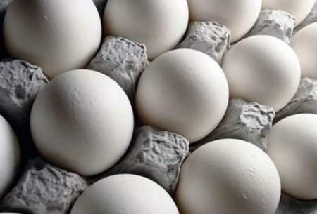 نگاهی به قیمت تخممرغ در بازار