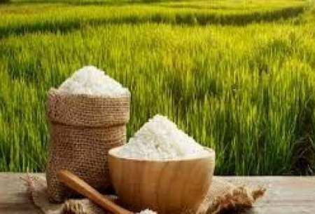 صادرات بیش از ۶۰۰هزار تن برنج گیلان