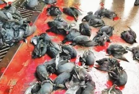 قتلگاه پرندگان مهاجر