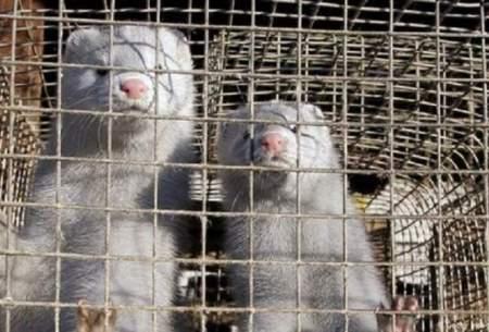 کدام حیوانات پتانسیل آلودگی به کرونا را دارند؟