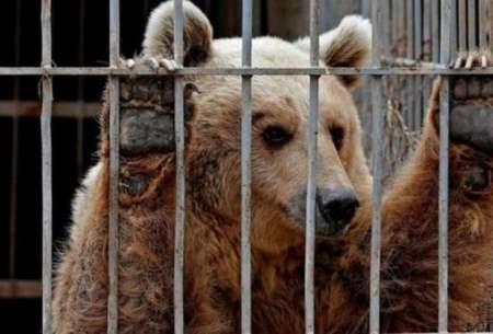 وضعیت دردناک باغ وحشهای کشور